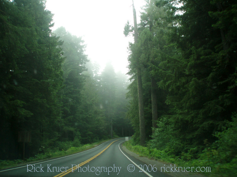 The deep dark woods as we leave the Redwoods heading north toward Crescent City, CA.<br /> P7090310-RedwoodsFog-2.jpg