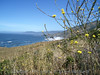 Eileen's photo of the coast north of Fort Bragg, CA on California coast road CA1.<br /> P7090273-OceanFlowers-2.jpg