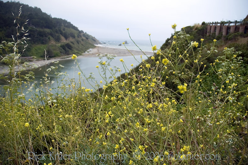 Ocean wildflowers on the road California route CA128 near the north end near the merge onto CA1 on the coast near Fort Bragg, CA. This river met the ocean here and it was a beautiful view.<br /> ND70_2006-07-09DSC_4299-OceanFlowersRoadNearFortBraggCA-2.JPG