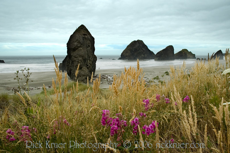 A nice shot of wildflowers and giant rocks in the ocean taken at Cape Sebastian, OR which is north of Brookings, OR and south of Gold Beach, OR.<br /> ND70_2006-07-11DSC_4410-CapeSebastionOR-CoastRocksFlowers-4 copy.jpg