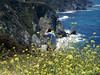 Eileen's wildflower and Big Sur scenic photo also captures Rick on the edge of the cliff taking photos of Bixby Bridge. A few minutes later at Hurricane Point we got a good look at how steep the cliff was at Bixby Bridge... Wow, we were crazy getting so close to the edge.<br /> P7252036-RickPhotosFlowersOceanView-2.jpg