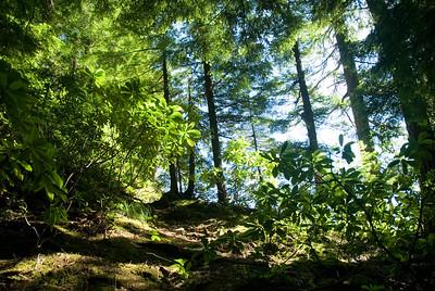 The sun peeking through the deep, dark woods on the trail to see Salt Creek Falls near Oakridge, OR.  D200_2007-07-04DSC_0951-TrailTrees-nice-2.jpg