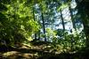 The sun peeking through the deep, dark woods on the trail to see Salt Creek Falls near Oakridge, OR.<br /> <br /> D200_2007-07-04DSC_0951-TrailTrees-nice-2.jpg