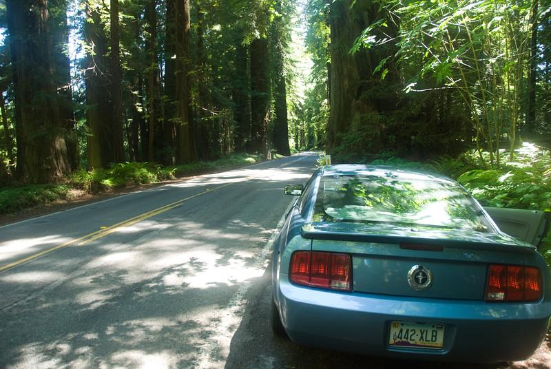 Giant Redwoods along US 101<br /> Avenue of the Giants, Northern California<br /> July 2007<br /> <br /> Copyright © 2007 Rick Kruer<br /> rickkruer.com<br /> <br /> D200_2007-07-22DSC_2780-MustangRoadRedwoodsUS101AveGiants-2.psd