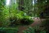 Eileen capturing that last Redwood photo as we are losing daylight.<br /> D200_2007-07-21DSC_2763-EileenPhotosRedwoods-2.JPG