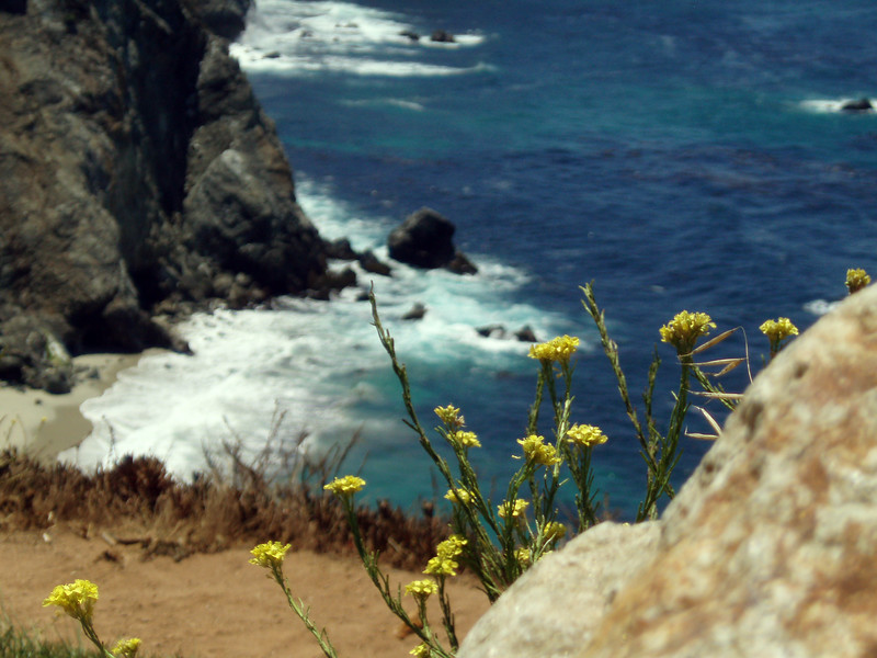 Eileen's great scenic photo of the wildflowers and rocky coast near Bixby Bridge, Big Sur, CA.<br /> P7252030-OceanBixbyBridgeFlowers-2.jpg