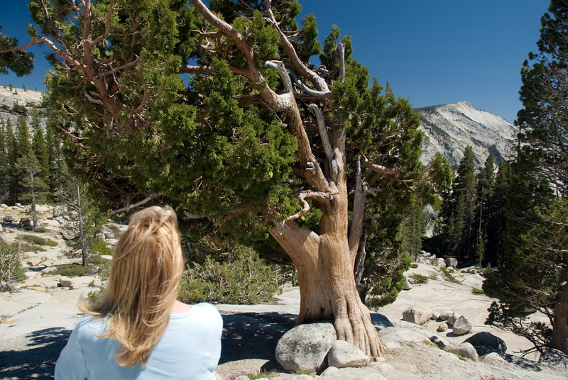 Eileen loves the interesting looking tree at Olmested Point, Yosemite.<br /> <br /> D200_2007-07-02DSC_0788-EileenLovesTree-OlmstedPoint-2.JPG