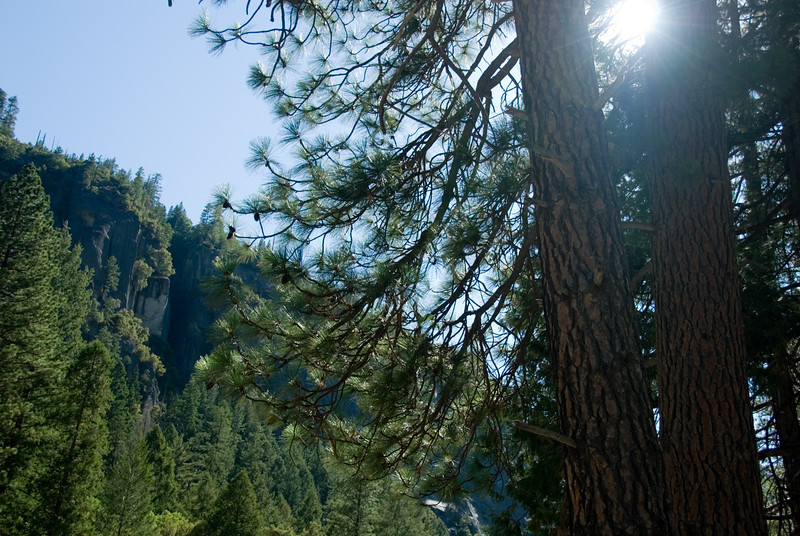 The sun peeking through the pine trees on the Merced River on CA140 as we head west toward Mariposa, CA.<br /> <br /> D200_2007-07-02DSC_0850-MercedRiverTrees-2.JPG