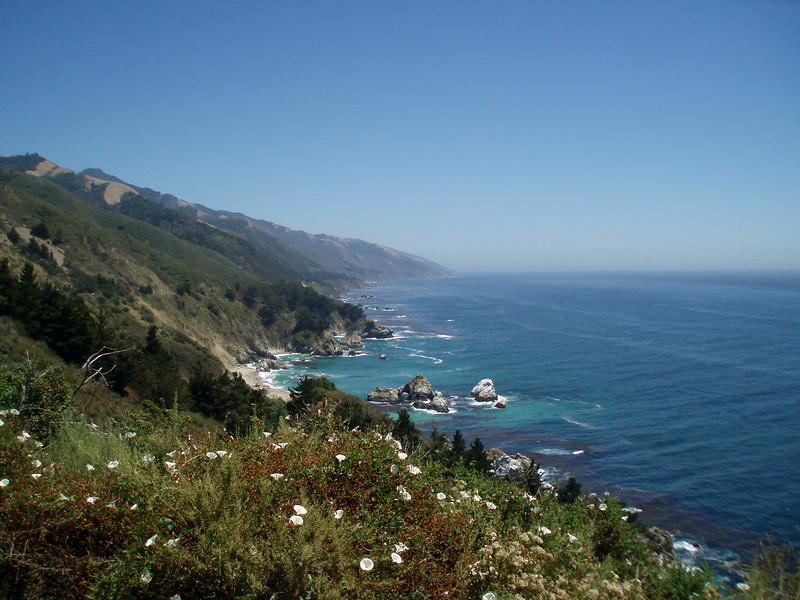 Eileen's nice photo of wildflowers growing along the coast road Big Sur, CA.<br /> P7252054-WildflowersBigSurOceanView-2.jpg