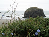 Eileen's nice photo in the fog of Arch Rock near Gold Beach, Oregon.<br /> P7211804-ArchRockFlowers-2 copy.jpg