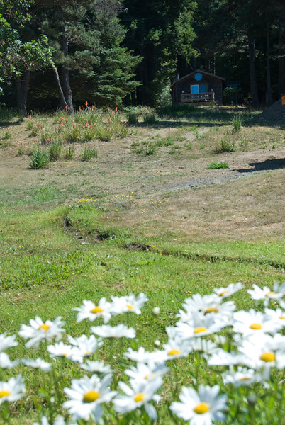 Eileen loved the daisies in front of our cottage at the St Orres Inn.<br /> D200_2007-07-23DSC_2890-RoseCottageDaisiesStOrresGualala-2.JPG