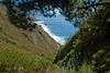 Pinetree Ocean View from Limekiln State Park<br /> Big Sur, California<br /> July 2007<br /> <br /> Copyright © 2007 Rick Kruer<br /> rickkruer.com<br /> <br /> D200_2007-07-25DSC_3330-PinetreesNearLimekilnStateParkView-2.psd
