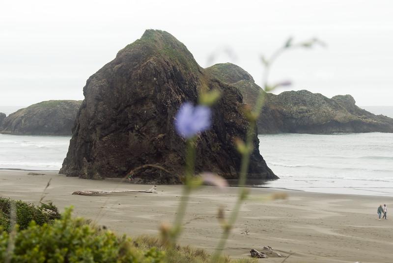 Haystack Rocks on the beach at<br /> Gold Beach, Oregon<br /> July 2007<br /> <br /> Copyright © 2007 Rick Kruer<br /> rickkruer.com<br /> <br /> D200_2007-07-21DSC_2716-BlueFlowerGoldBeach-nice-2.psd