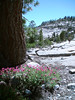 Eileen's flowers as we start our walk at Olmsted Point, Yosemite.<br /> <br /> P7021176-Flowers-2.jpg