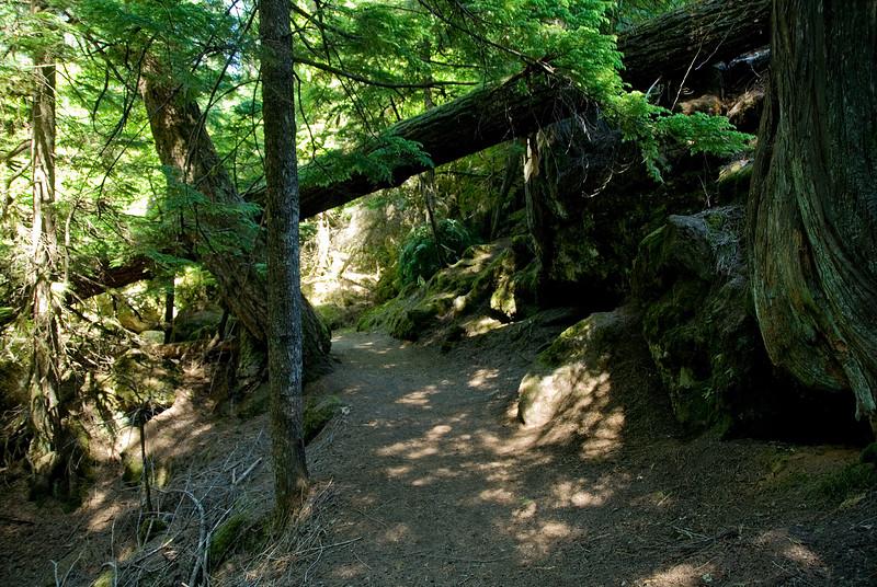 The trail to upper Salahie Falls, Oregon<br /> July 2007<br /> <br /> Copyright © 2007 Rick Kruer<br /> rickkruer.com<br /> <br /> D200_2007-07-05DSC_1099-TrailSalahieFalls-2.PSD