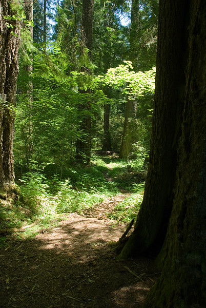 A view of the forest trail as we take a liesurly walk through the forest.<br /> D200_2007-07-05DSC_1021-ForestView-2.jpg