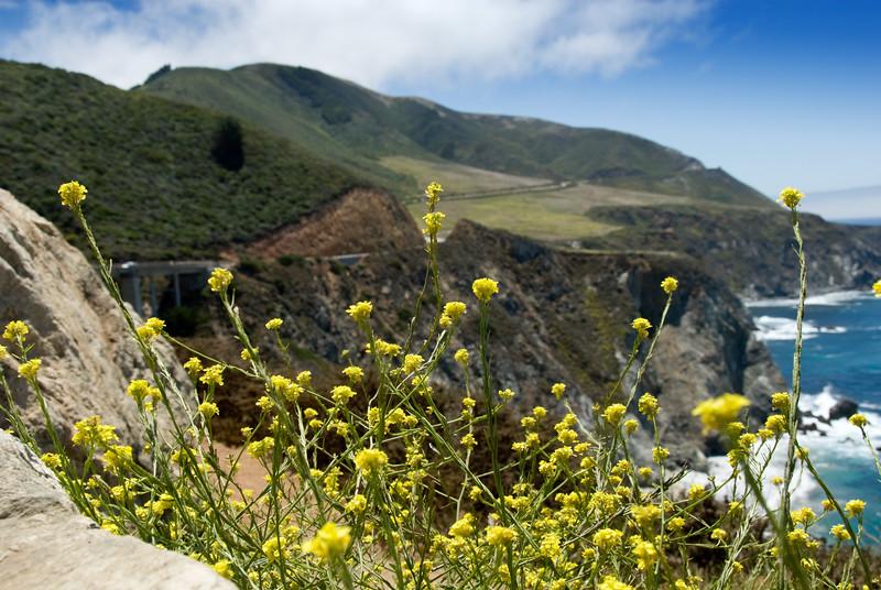 Wildflowers by the Bixby Bridge<br /> Big Sur, California<br /> July 2007<br /> <br /> Copyright © 2007 Rick Kruer<br /> rickkruer.com<br /> <br /> D200_2007-07-25DSC_3267-BixbyBridgeFlowersSouth-nice-2.psd