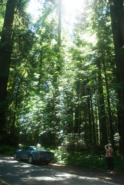 Eileen taking photos of the sunbeams coming through the tall Redwood trees on US 101.<br /> D200_2007-07-22DSC_2778-EileenSunbeamPhotosRedwoodsTreesTall-2.JPG