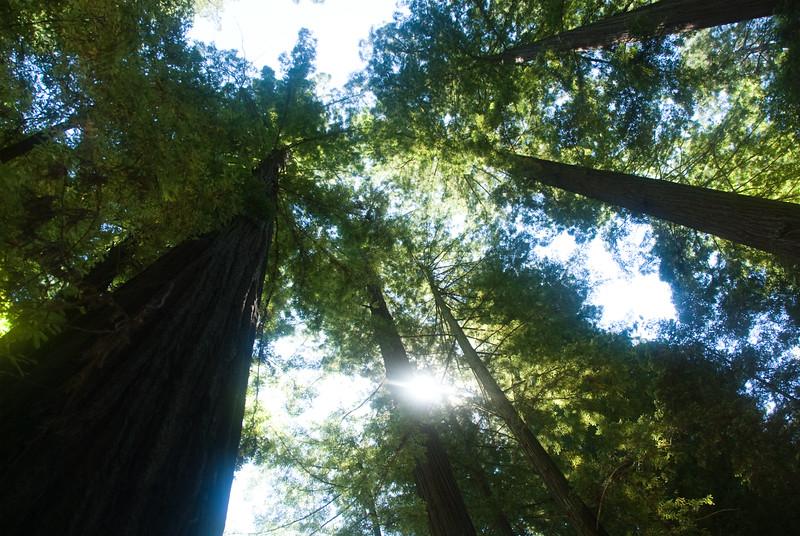 The tall Redwoods meet the sky.<br /> D200_2007-07-22DSC_2798-RedwoodsTreetopsSun-2.JPG