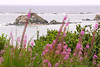 Oregon Wildflowers on Simpson Reef (Sea Lions lounging in background)<br /> Oregon Coast<br /> July 2007<br /> <br /> Copyright © 2007 Rick Kruer<br /> rickkruer.com<br /> <br /> D200_2007-07-20DSC_2635-FlowersSimpsonReefSeaLionsDistance-2.psd