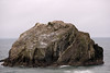 Face Rock closeup<br /> Bandon, Oregon<br /> July 2007<br /> <br /> Copyright © 2007 Rick Kruer<br /> rickkruer.com<br /> <br /> D200_2007-07-21DSC_2644-FaceRockCloseup-200mm-2.psd