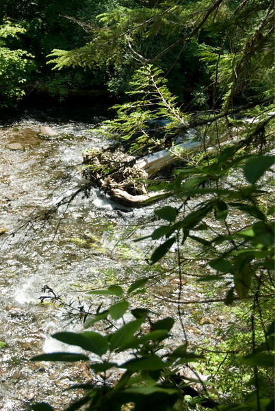 The McKenzie River peeking through the trees.<br /> D200_2007-07-05DSC_1011-McKenzieRiverTrees-2.JPG