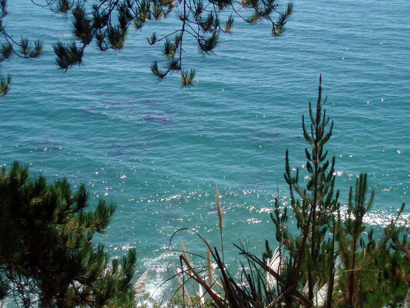 The ocean glitters through the pine trees of Lime Kiln State Park, Big Sur, CA.<br /> P7252090-OceanGlitterPineTrees-2.jpg