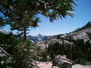 Eileen captured an evergreen that was greener than green on her walk at Olmsted Point, Yosemite.<br /> <br /> P7021181-OlmestedPointTree-2.jpg