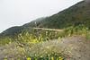 D200_2008-06-28DSC_5677-WildFlowersBigSurRoad-2