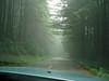 P6303179-RoadFogLadyBirdJohnsonGroveRedwoods-nice-2