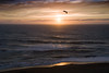 Sunset Seagull on the Central Oregon Coast<br /> July 2008<br /> <br /> Copyright © 2008 Rick Kruer<br /> rickkruer.com<br /> <br /> D200_2008-07-14DSC_6758-CavalierSunsetSeagullFlying-nice-2.psd