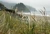 D200_2008-07-19DSC_7120-GrassFogProposalRock-2