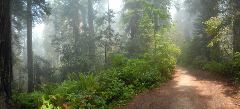 Foggy Redwoods Path - Panorama (5 Photos)<br /> Lady Bird Johnson Grove<br /> Nat'l Redwoods Park, Orick, California<br /> July 2008<br /> <br /> Copyright © 2008 Rick Kruer<br /> rickkruer.com<br /> <br /> D200_2008-06-30DSC_5809--5914-RedwoodsFogPan-3.psd