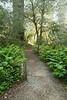 D200_2008-06-30DSC_5815-RedwoodsFogTheTrail-nice-2