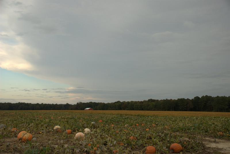 Eastern Shore Pumpkin Patch