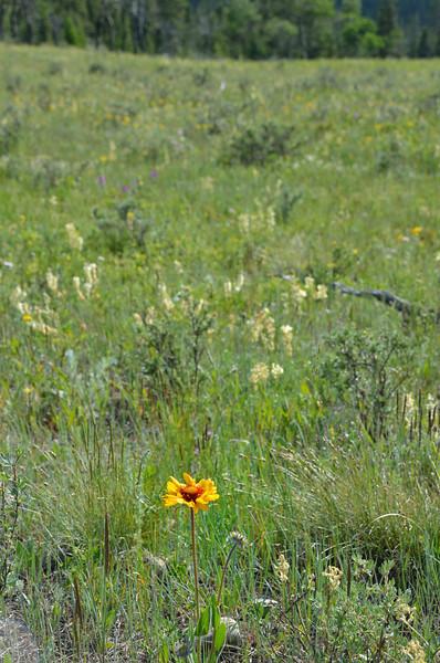 Meadow near Middle Lake