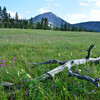 Meadow near Middle Lake