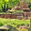 Wild Africa Trek - Animal Kingdom