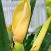 Palma Sola Botanical Garden