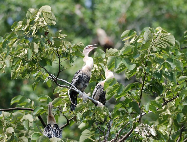 Birds - Homosassa Springs Wildlife State Park