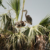 Birds - Homosassa Springs Wildlife State Park