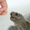 Have you ever seen a begging tortoise?
