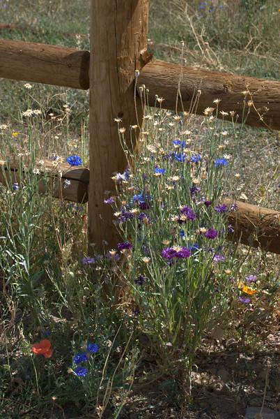 Wildflowers near Sun Valley, Idaho