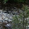 Creek waters.