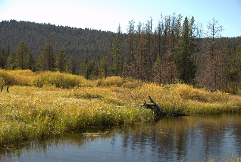 Near Stanley Lake