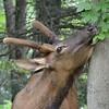 """PA Elk - <a href=""""http://paelk.com/"""">http://paelk.com/</a>"""