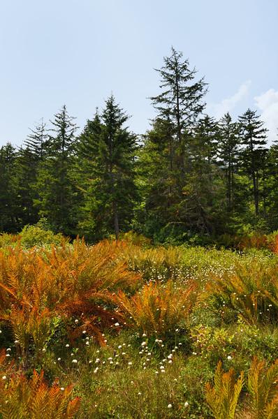 Cranberry Glades Botanical Area