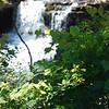Wildflowers at Glade Creek