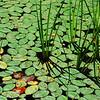 Grasses at Boley Lake