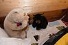 2012-03-29 - Big Bear Weekend - 012 - Cabin (Bedroom 3) - _DS30386